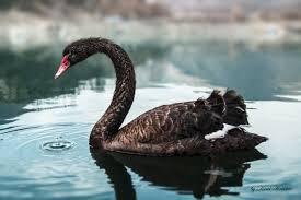 Новые «черные лебеди» от SocGen