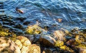 В сточных водах Швейцарии ожидают найти золото на $1.8 млн