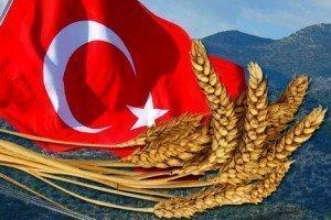 Продажа пшеницы из России в Турцию стала первой криптовалютной фрахтовой сделкой